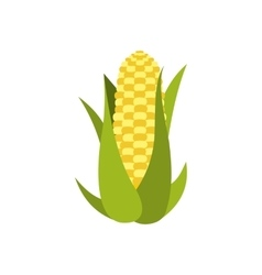 Corn cob icon vector image