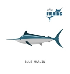 Blue marlin sea fishing vector
