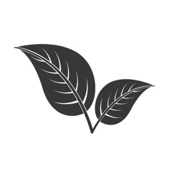 Leafs plant isolated icon design vector