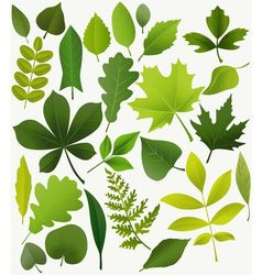 Tree leaves vector image vector image