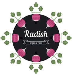 Radish vegetables vector