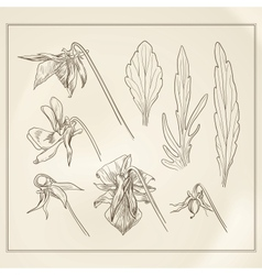 Botanical flowers vintage vector