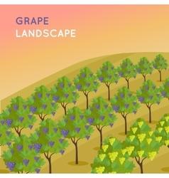 Vineyard plantation of grape-bearing vines vector