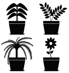 flower in pot black vector image