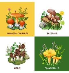 Wild mushrooms 2x2 design concept vector