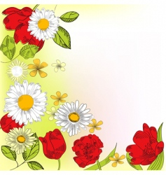 Chamomiles and tulips vector