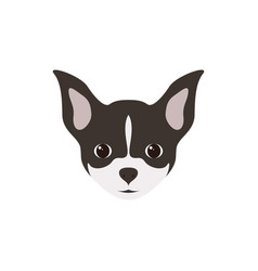 portrait of chihuahua puppy simple dog vector image vector image