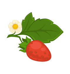 red strawberry with green leaf and flower isolated vector image vector image