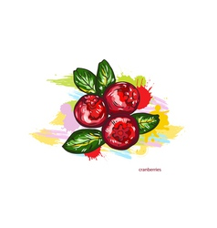 Cranberries with colorful splashes vector