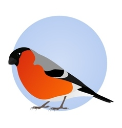 Bullfinch isolated on blue circle frame vector