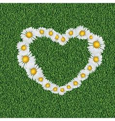Daisy heart on grass vector image
