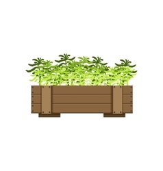 Plants in a wooden crate vector
