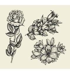 Flowers hand drawn sketch flower bell rose lily vector