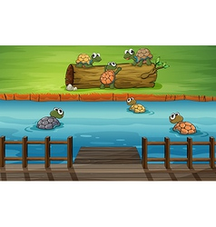 A group of turtles at the river vector image vector image