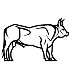 Powerful horned bull vector