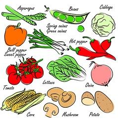 vegetables vector image
