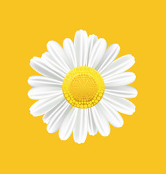 chamomile realistic symbol yellow background with vector image