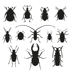 Colorful insects biology collection vector