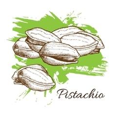 Hand drawn pistachios vector