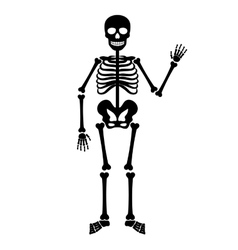 halloween black skeleton vector image