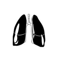 Lungs human anatomy hand drawn isolated on a white vector
