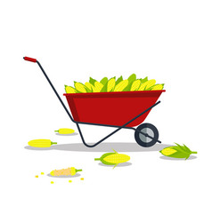 yellow corn in red wheelbarrow flat style vector image