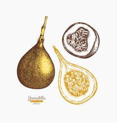Sweet granadilla vector