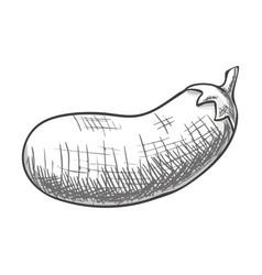 monochrome eggplant isolated vector image vector image