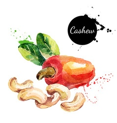 Hand drawn watercolor painting of cashew nut vector