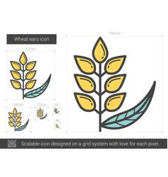 Wheat ears line icon vector