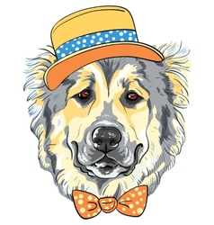 Dog caucasian shepherd dog breed in hat and vector