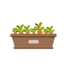 Carrots growing in crate vector