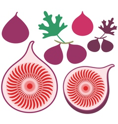 Fig vector