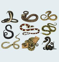 Set viper snake serpent cobra and python vector