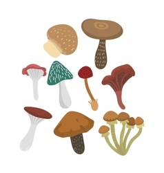 Mushrooms set vector
