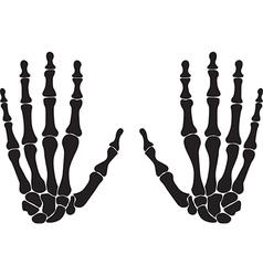 Bones of the hand vector