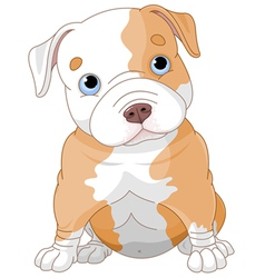 Pitbull puppy vector image vector image