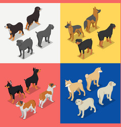 Isometric dog breeds with rottweiler retriever vector