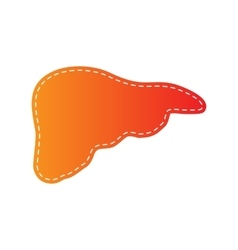 Human anatomy  liver sign orange vector