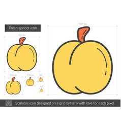 fresh apricot line icon vector image vector image