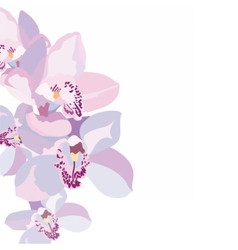 Orchid flowers isolated vector