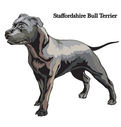 Staffordshire bull terrier vector