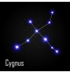 Cygnus Constellation with Beautiful Bright Stars vector image