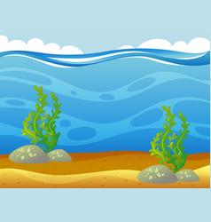 underwater scene with seaweeds vector image
