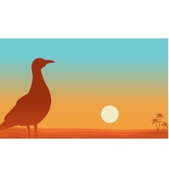 Landscape of bird in beach silhouettes vector