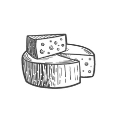Cheese engraving style vector