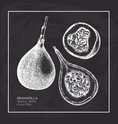 sweet granadilla vector image vector image