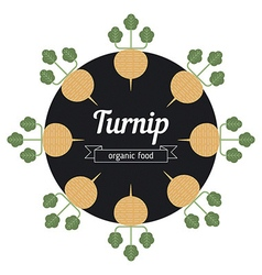 Turnip vegetables vector image vector image