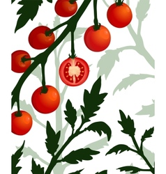 Botanical tomato branch with sliced section plant vector