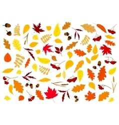Autumn leaves herbs berries and acorns vector
